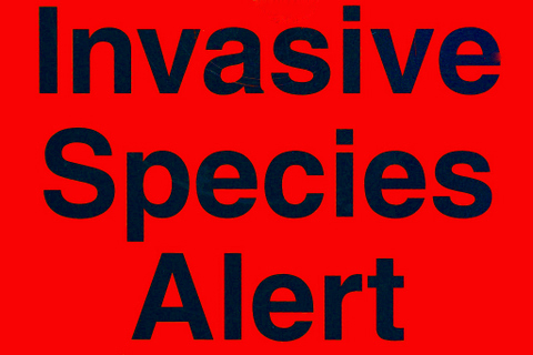 1-Invasive species.jpg