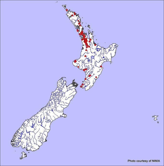 1-Koi carp areas.jpg