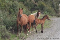 Phil Bendle Collection:Horses (Feral) .