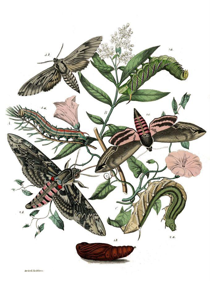 1-Vintage-Bohemian-Moth-Print-sm-GraphicsFairy.jpg