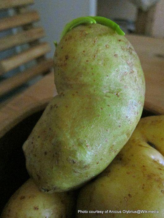 1-green potato.jpg