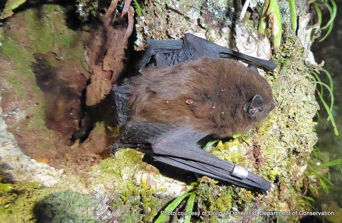 1-long-tailed-bat-2.jpg