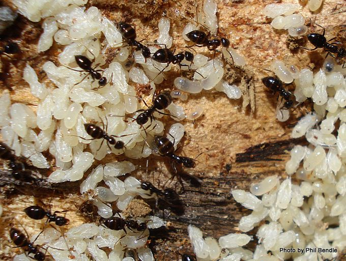 Ants nest-20.jpg