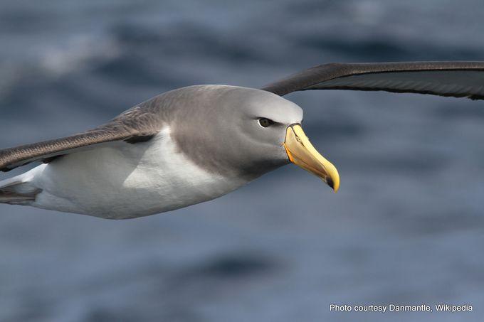 Chatham Albatross- -001.jpg