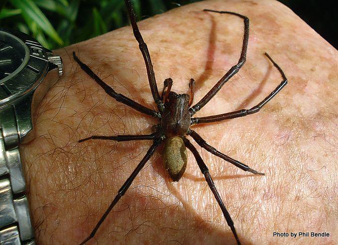 Spider Sheetweb.JPG